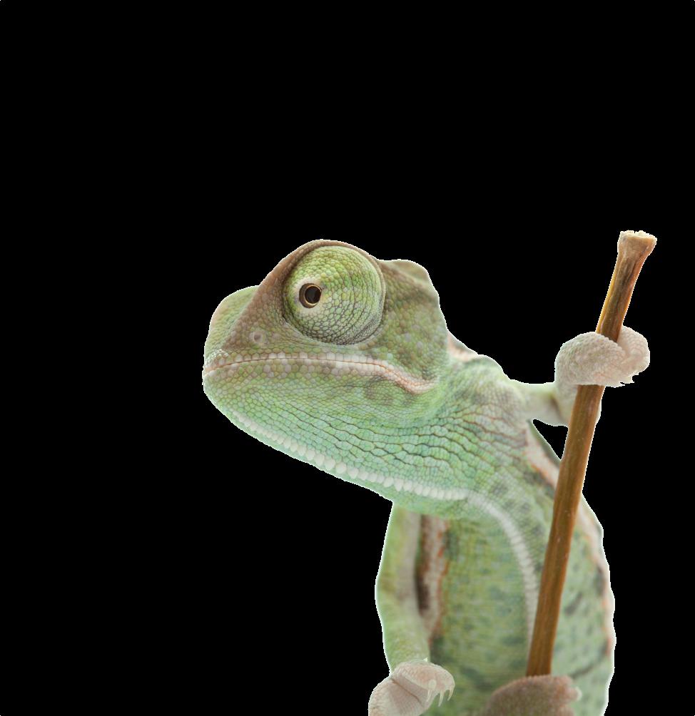 SMARTTESTER - Gecko